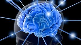 cerebro-inteligencia-20120801-01-size-598