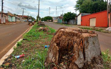 Decisão de derrubar palmeiras em avenida de Tucuruí divide opiniões