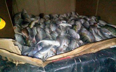 Operação apreende 2,5 toneladas de pescado na região do lago de Tucuruí