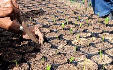 Eletrobras Eletronorte já doou mais de 43 mil mudas para reflorestamento na região