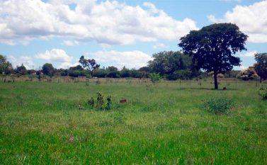 Justiça dá 10 dias de prazo para a desocupação da Fazenda Três Lagoas