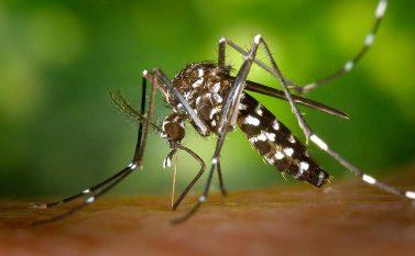 Vigilância em Saúde de Redenção se mobiliza contra o Aedes aegypti