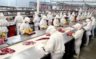 Redenção, Xinguara e São Félix do Xingu registram queda na exportação de carne