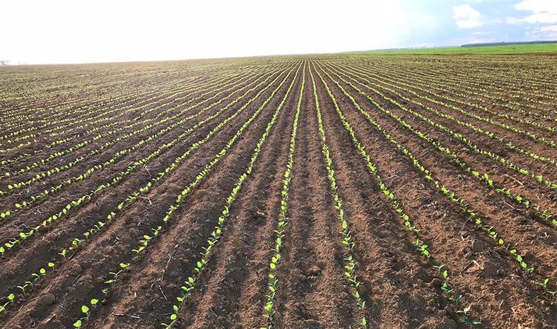 Comissão de Agricultura da Alepa convoca reunião sobre embargo à soja no Pará