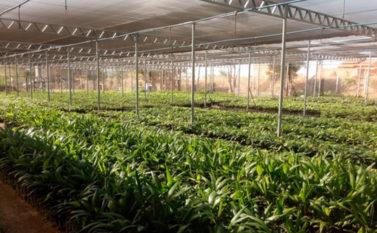 Prefeitura de Canaã licita quase R$ 8 milhões para agronegócio em 2020