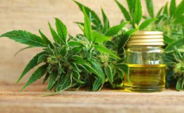 Anvisa aprova regulamentação de produtos à base de cannabis