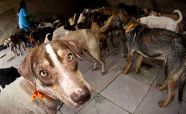 Ex-prefeito de Santa Cruz do Arari é condenado a 20 anos de prisão por chacina de 400 cães