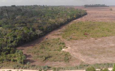 Áreas agrícolas têm maior avanço do Brasil em Santarém e Paragominas