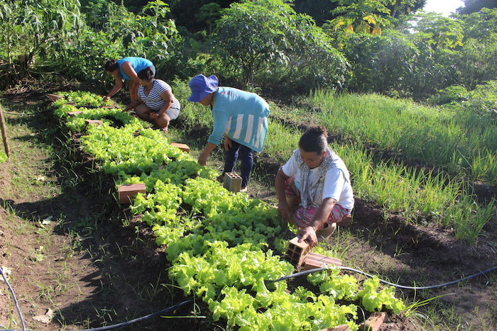 Governo estuda criação de nova linha emergencial de crédito para agricultura familiar