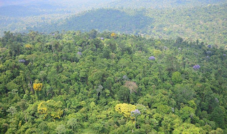 Carajás: Proteção da Floresta Amazônica ajuda no combate ao aquecimento global