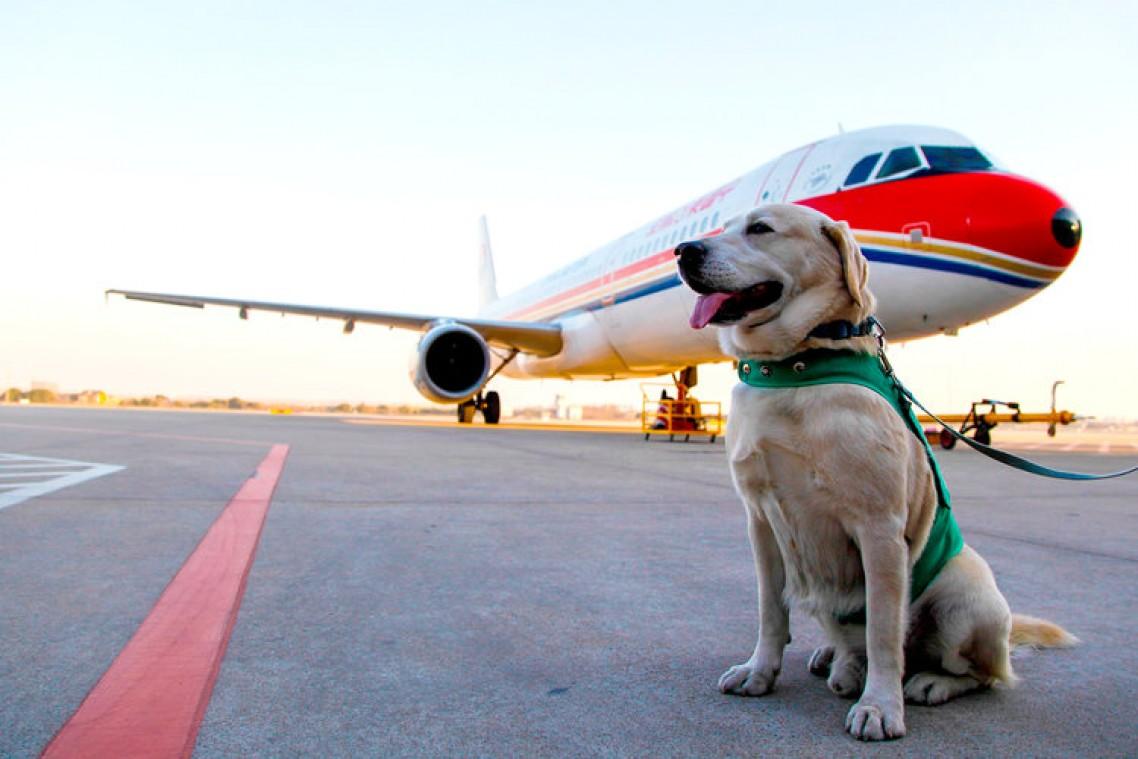 Justiça acata pedido liminar do MPPA e autoriza embarque de cão de apoio emocional de passageiro autista