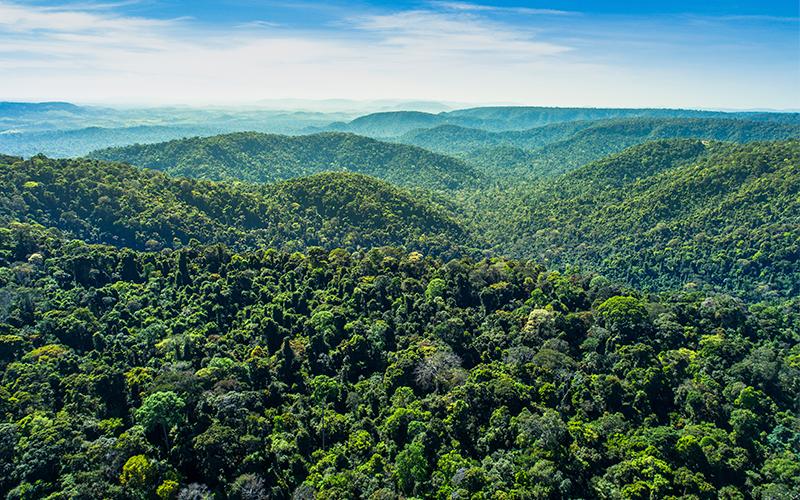 Dia da Amazônia: conheça as ações da Vale para a preservação do bioma brasileiro