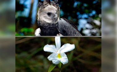 Protetores da Floresta: uma jornada Amazônia adentro